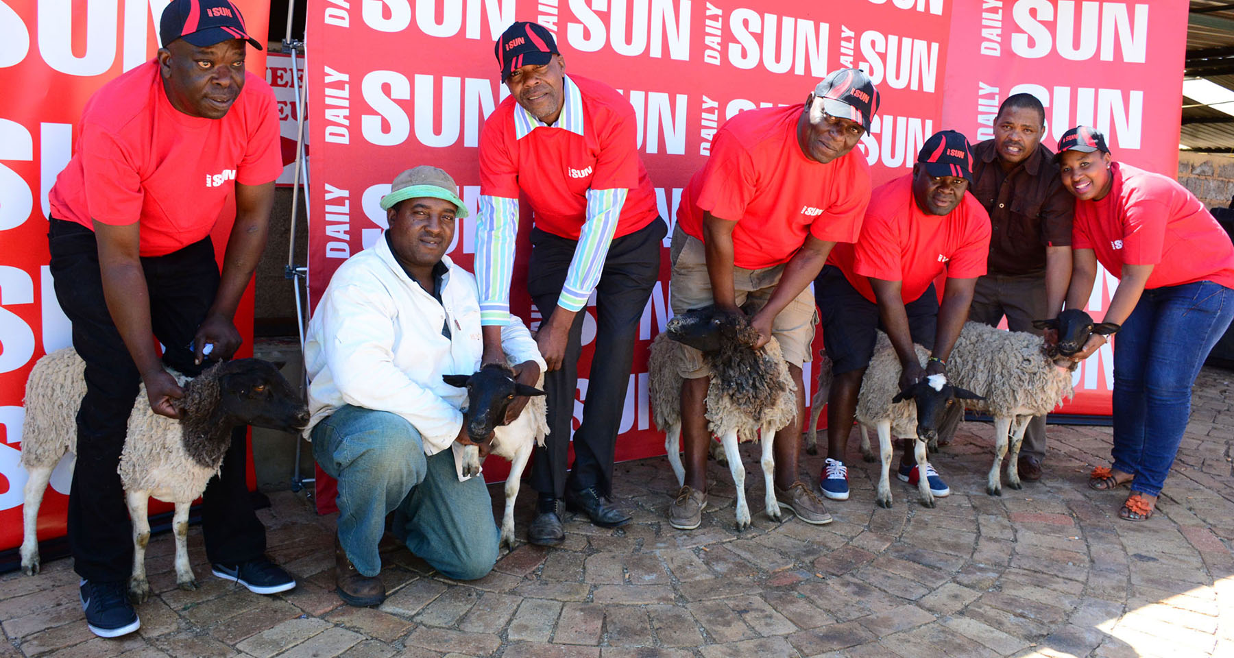 Daily Sun boosts sales with Christmas sheep giveaway
